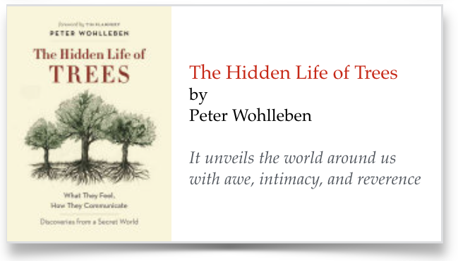"Graphic link to essay on, ""The Hiden Life of Trees."""