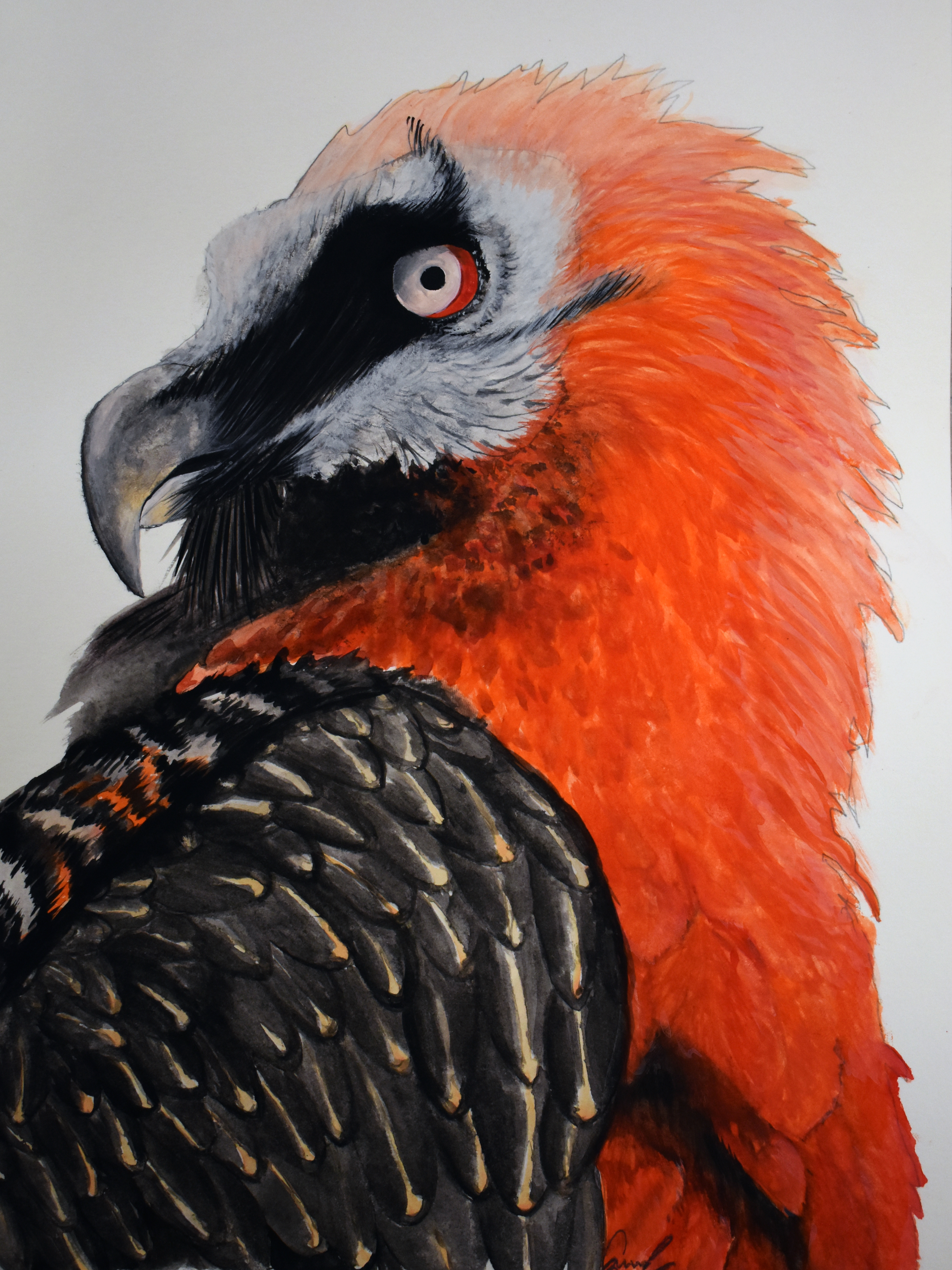 "Drawing titled ""Phoenix Risen"""