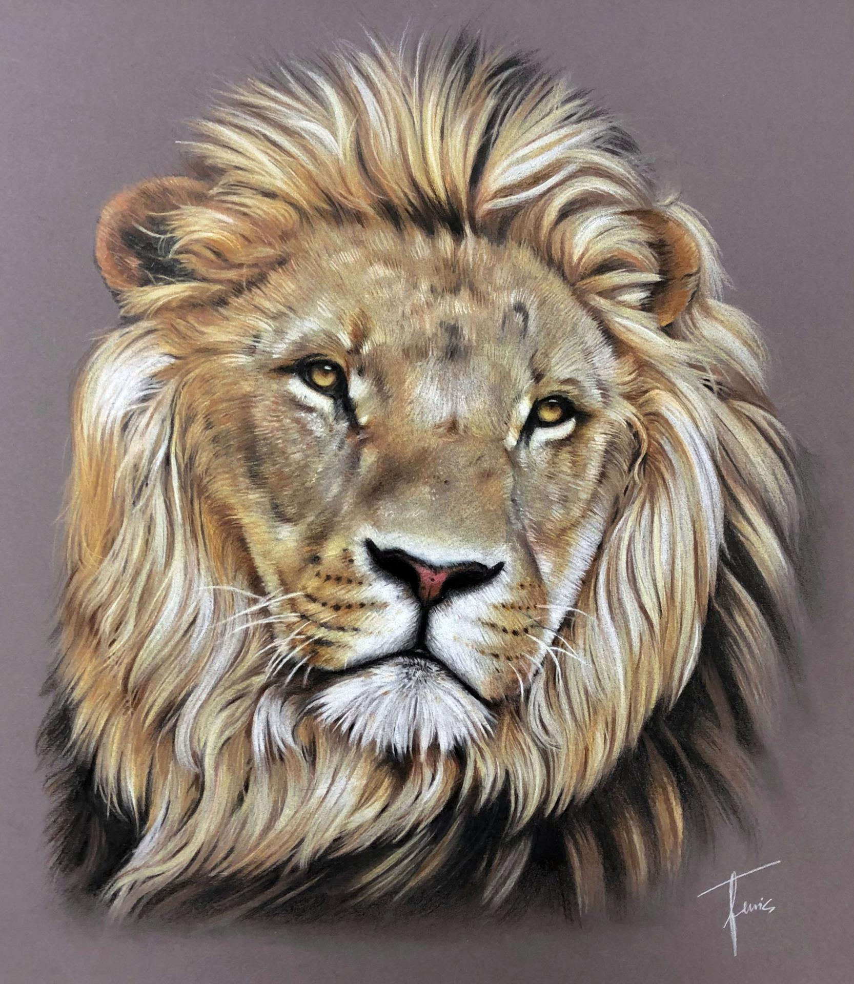 drawing of lion entitled ambition