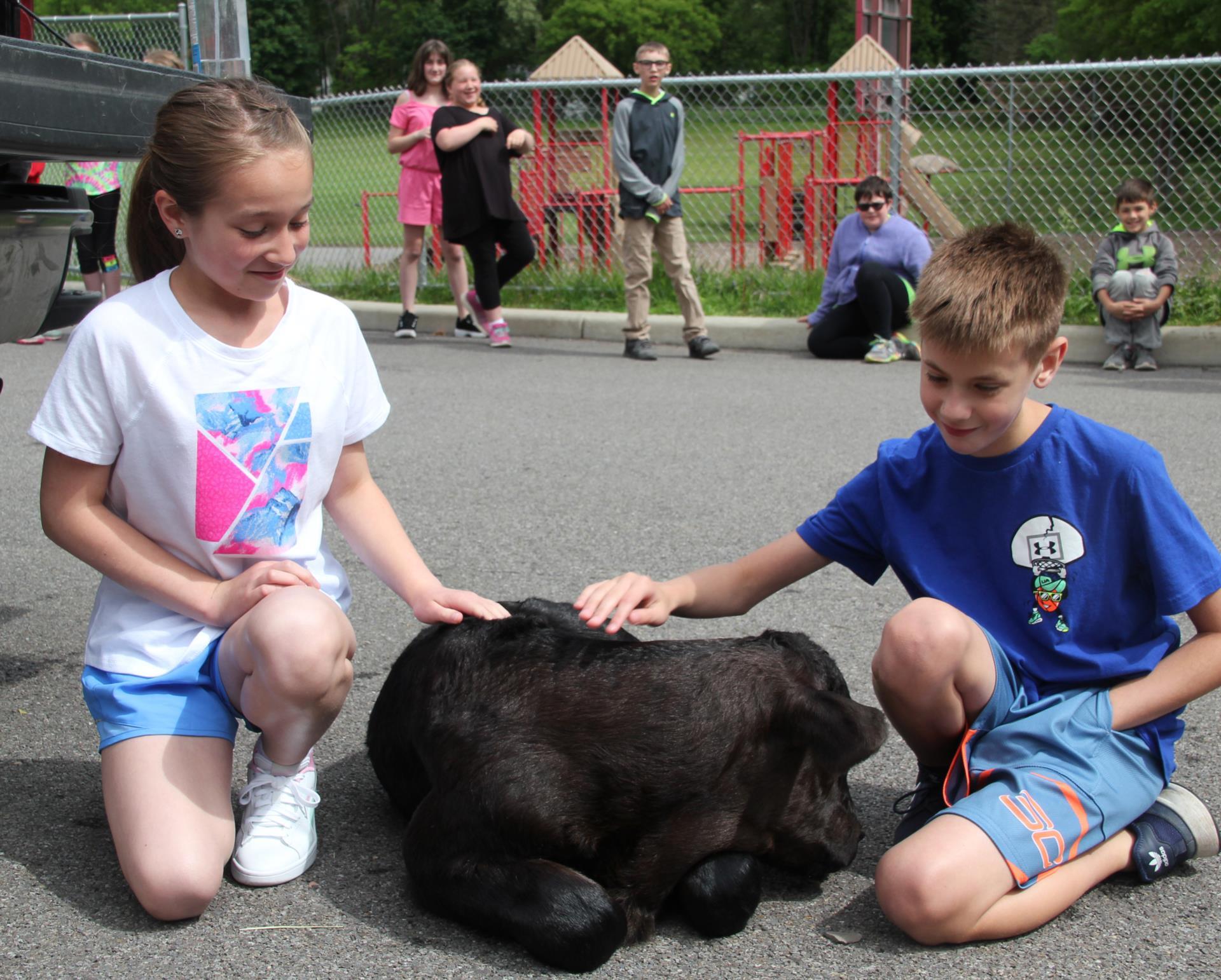 students petting calf