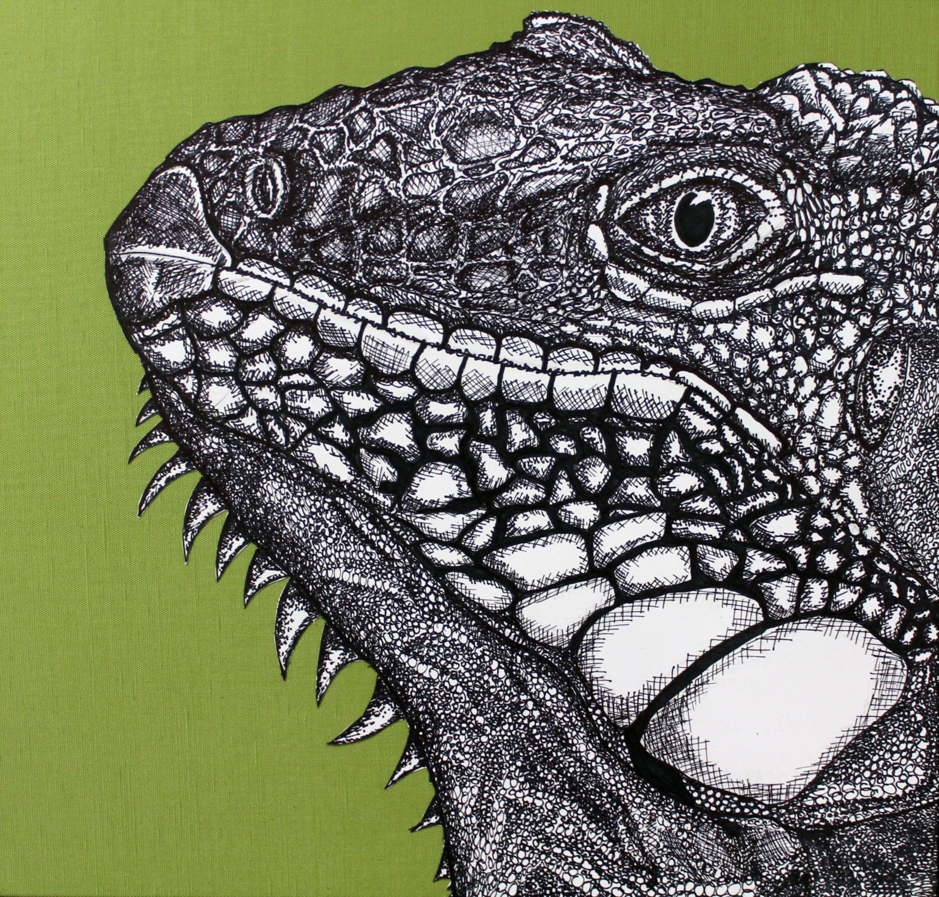 illustration of iguana