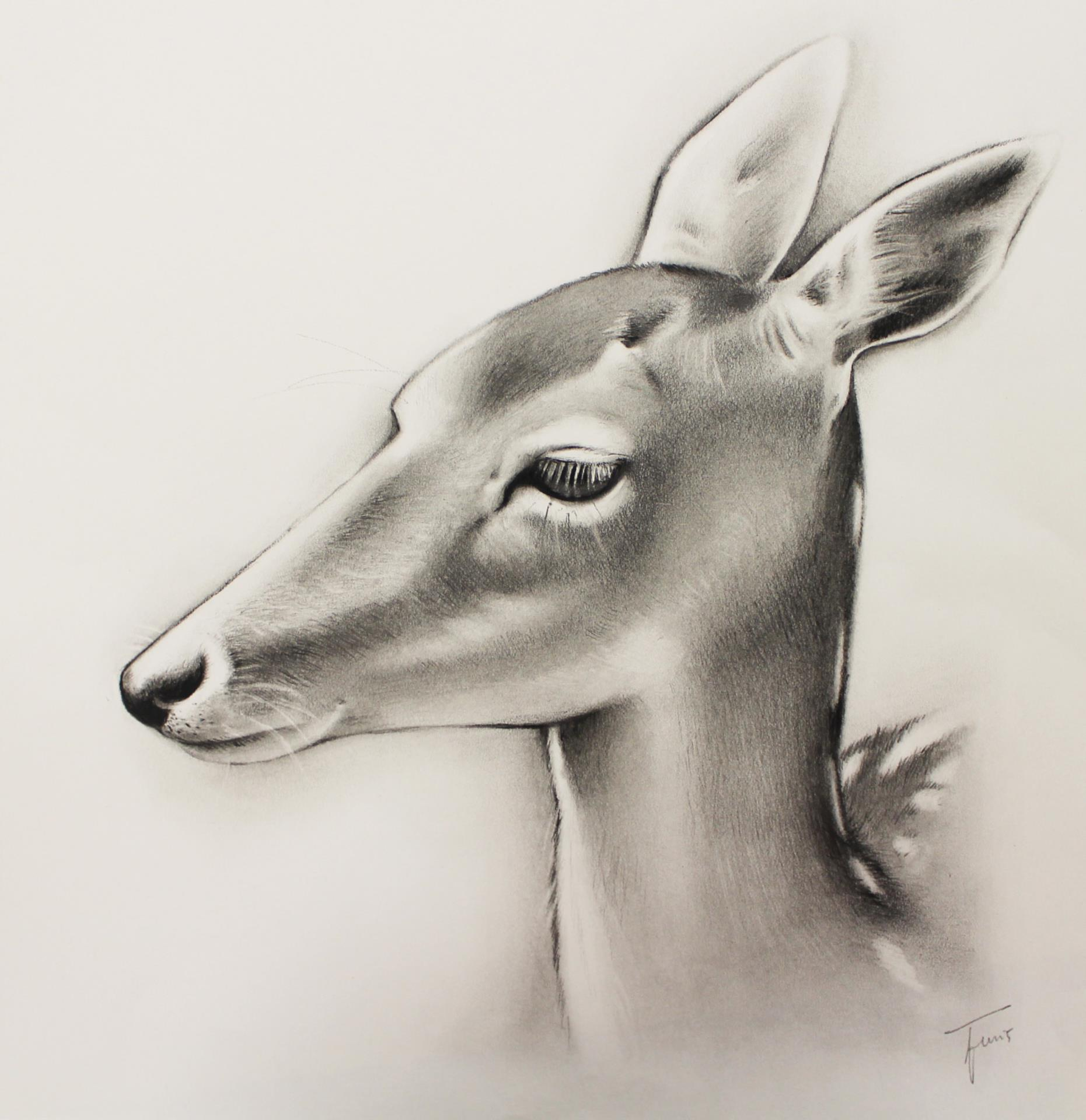 illustration of deer