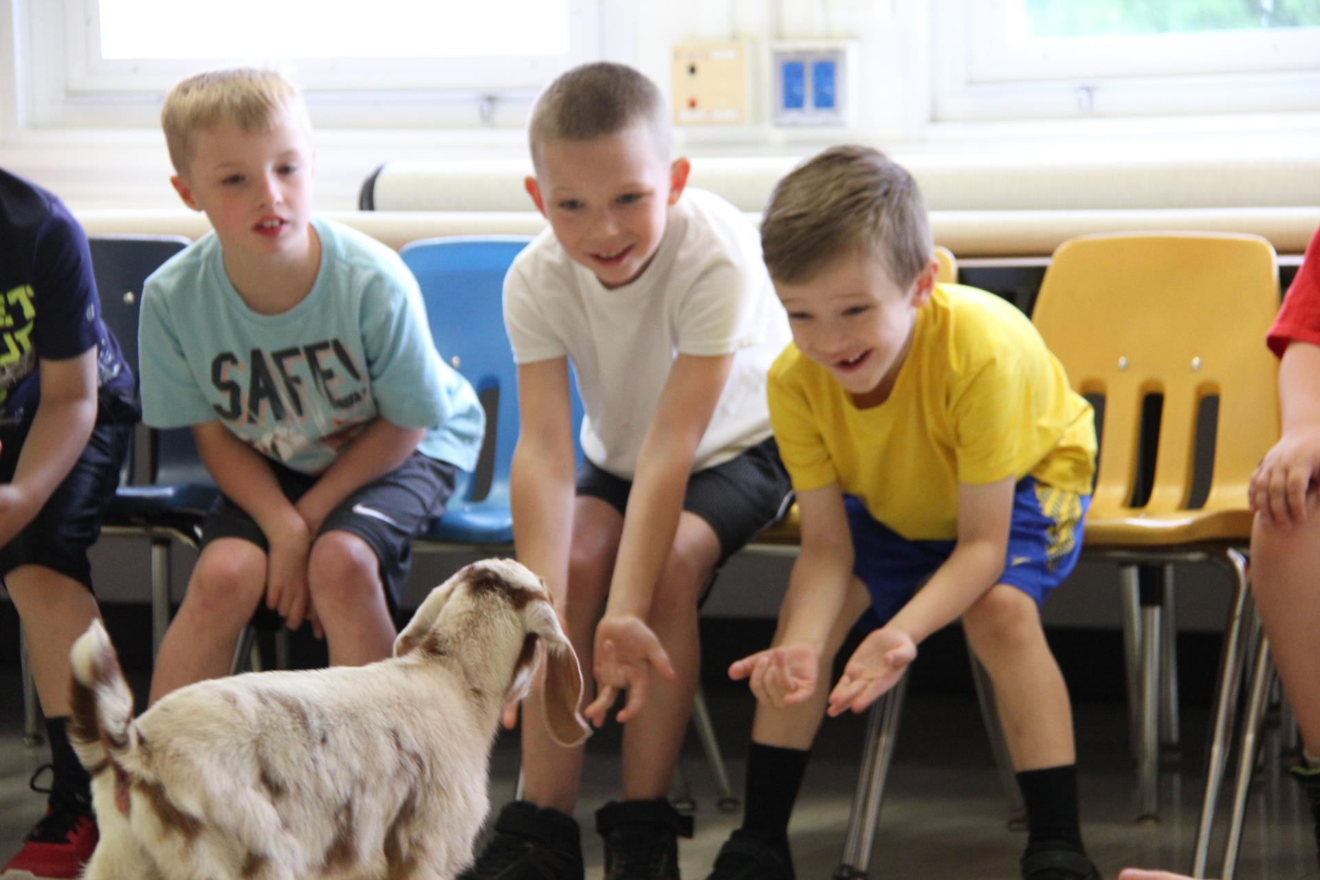 goat visitng students sitting